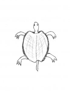 An image of a turtle, important to the Lenape, is used as a glyph in the book